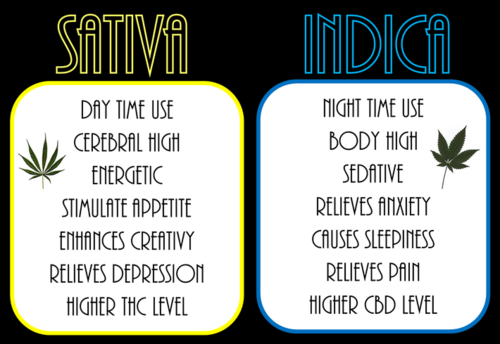 indica-sativa-difference