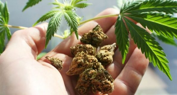 medical-cannabis-hiv-aids-south-africa