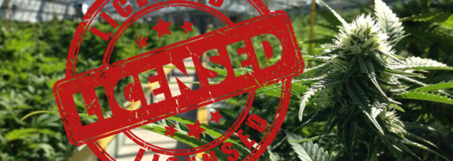 cannabis licence south africa