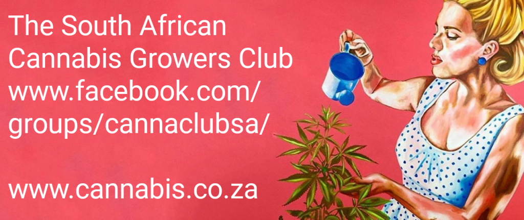medical cannabis website south africa