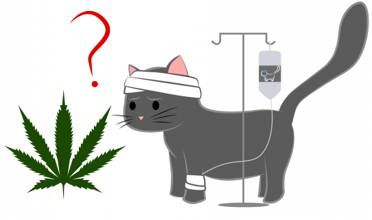 buy cannabis dogs cats south africa