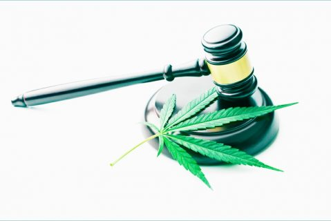 south-africa-cannabis-auctions
