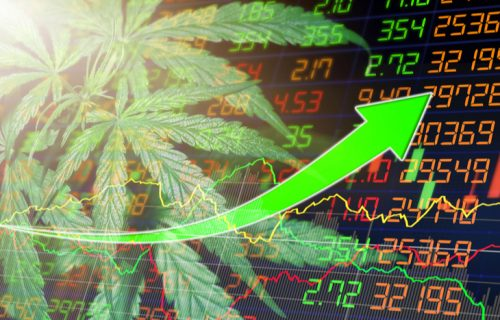 cannabis-investing-south-africa